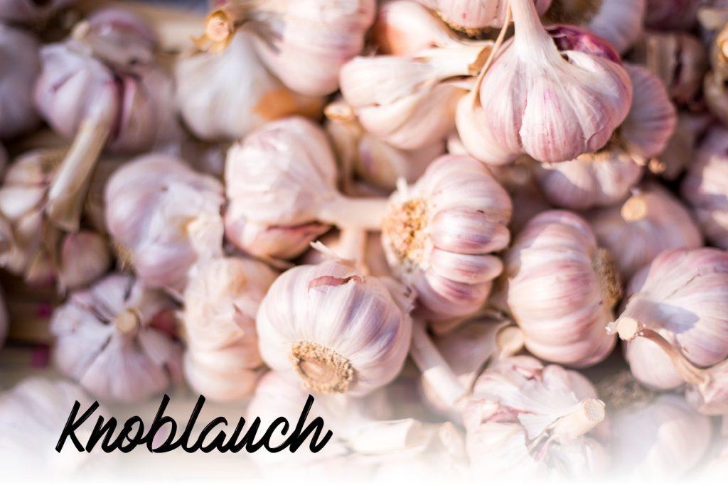 knoblauch